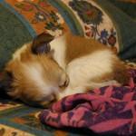 Филя спит