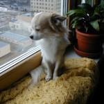 Филя смотрит в окно